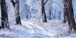 The Joys (and Pitfalls) of Winter During the School Year