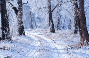 The-Joys-and-Pitfalls-of-Winter-During-the-School-Year-300×197