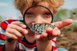 May 25 – summer learning – butterflies